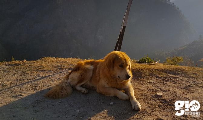 Real Mountain Guide - Himalayan Dog