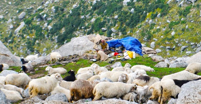 Shepherds, Gaddi, Triund