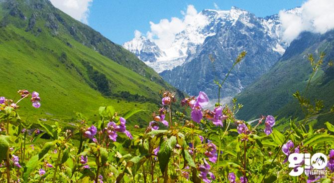 Valley of Flowers - GIO Adventures